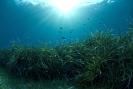 Algae & Seagrasses