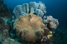 soft coral_1
