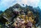 stony coral_4