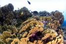 stony coral_7