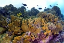 stony coral_8