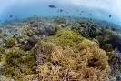 stony coral_9
