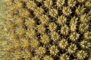 Stony Corals_34