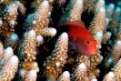 Stony Corals_47