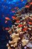 Stony Corals_7