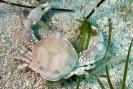 Crabs_4