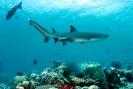 Sharks & Rays