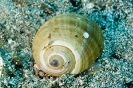 Snails & Chitons