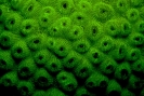 underwater fluorescence_8