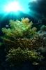 Underwater Scenes_11