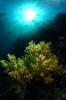 Underwater Scenes_12