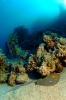 Underwater Scenes_13