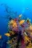 Underwater Scenes_14