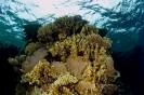 Underwater Scenes_18