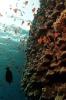 Underwater Scenes_20