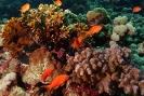 Underwater Scenes_21