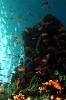 Underwater Scenes_22