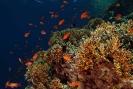Underwater Scenes_23