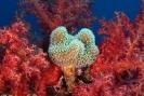 Underwater Scenes_26