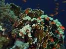 Underwater Scenes_29