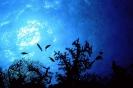 Underwater Scenes_31