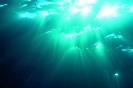 Underwater Scenes_33