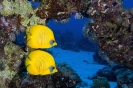 Underwater Scenes_39