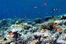 Underwater Scenes_48