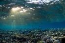 Underwater Scenes_54
