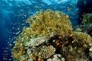 Underwater Scenes_56