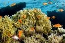 Underwater Scenes_58