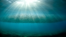 underwater Scenes_5