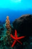 Underwater Scenes_65