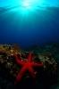 Underwater Scenes_66
