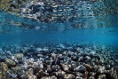 Underwater Scenes_69