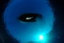 Underwater Scenes_72