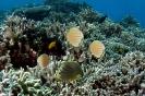 Underwater Scenes_78