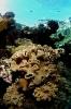 Underwater Scenes_7