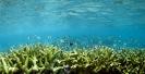 Underwater Scenes_82