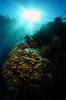 Underwater Scenes_8