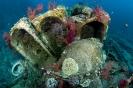 Jolanda Wreck (sunken 1981), Ras Muhammed-Red Sea