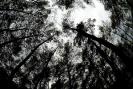 Nature_73