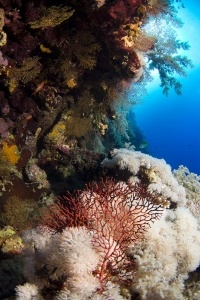 soft coral_6